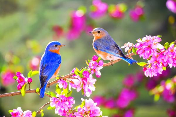 spring_bbirds